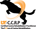 certified canine rehabilitation practitioner